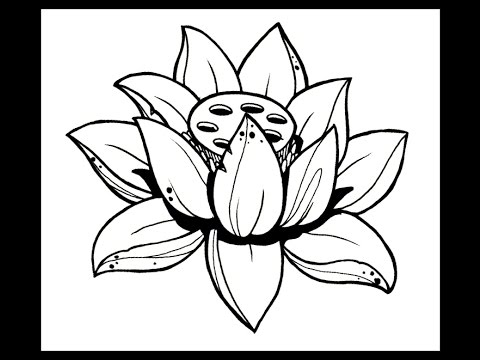 480x360 How To Draw A Lotus Flower By Thebrokenpuppet