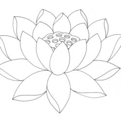 250x250 Lotus Drawing, Pencil, Sketch, Colorful, Realistic Art Images
