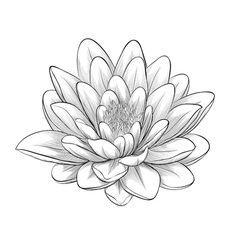 238x250 Lotus Flowers Drawings