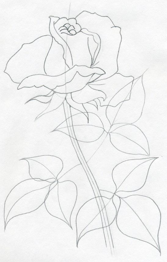547x857 Realistic Flowers To Draw