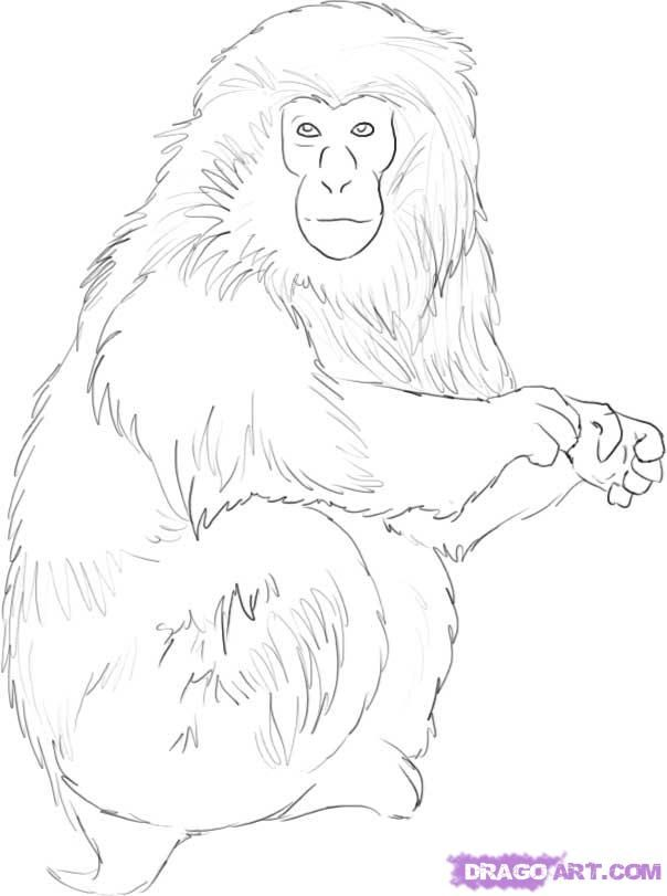 Realistic Monkey Drawing