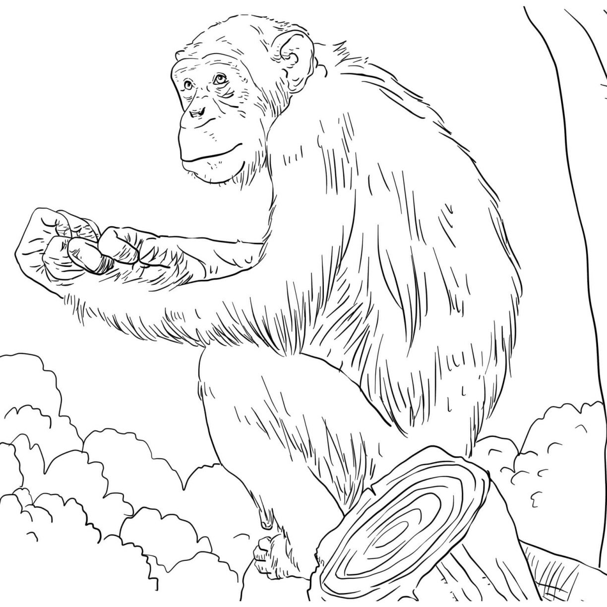 1224x1224 Free Coloring Baby Orangutan For Kids Page And Friends Printable