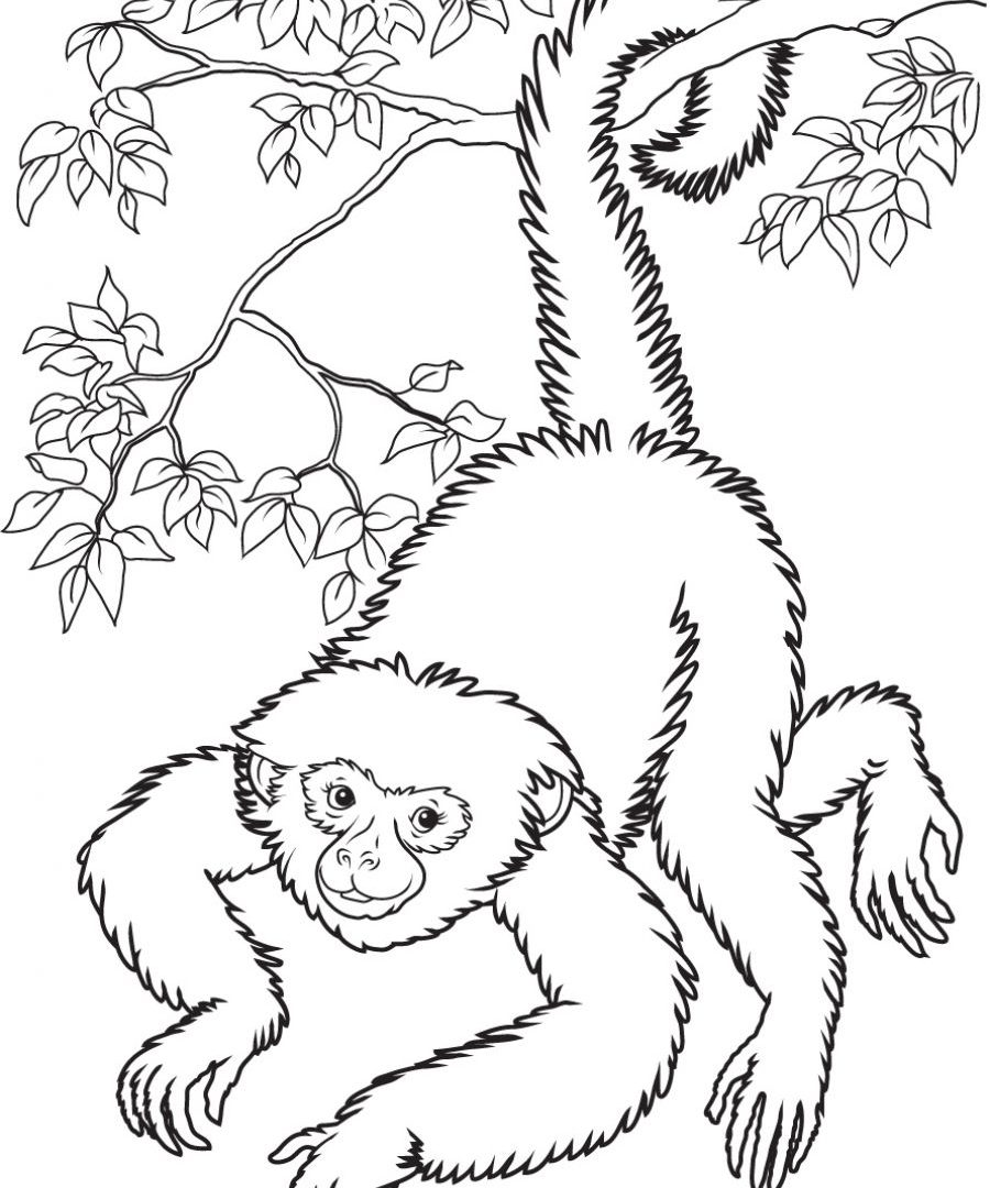 900x1080 Muriqui Or Wooly Spider Monkey Coloring Page Free To Print Animals