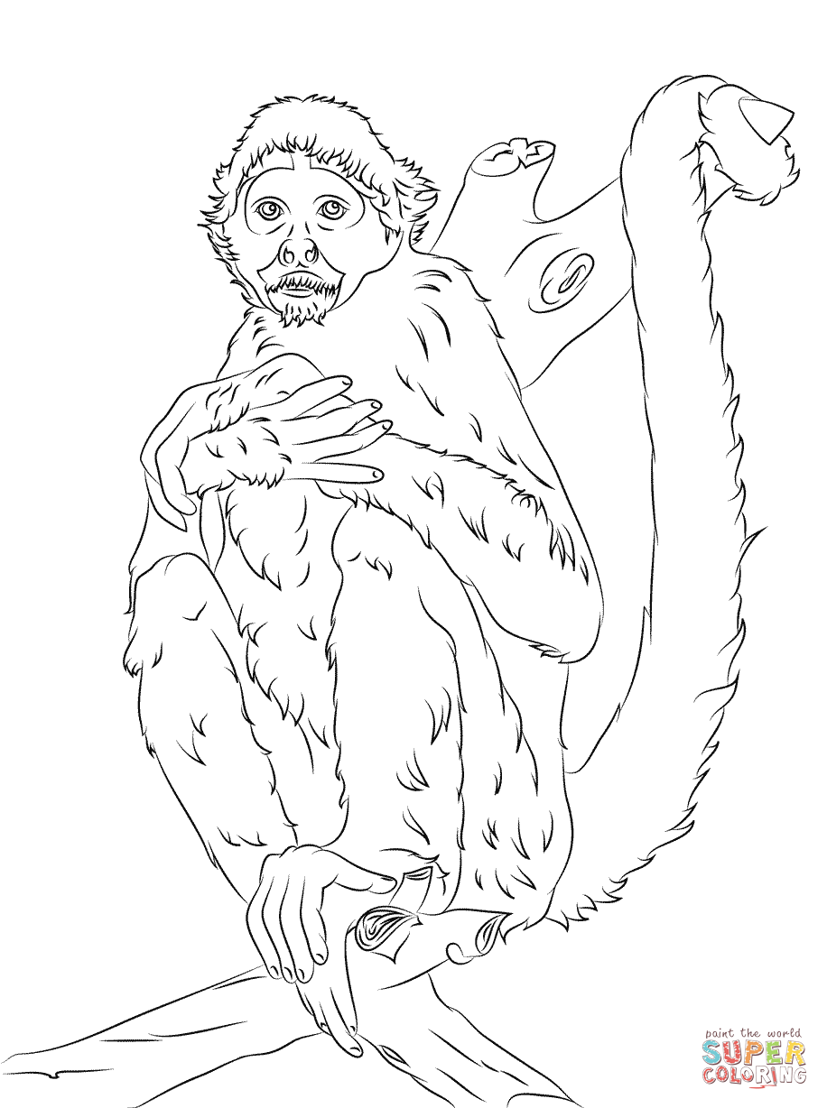 916x1228 Black Headed Spider Monkey Coloring Page Free Printable Coloring