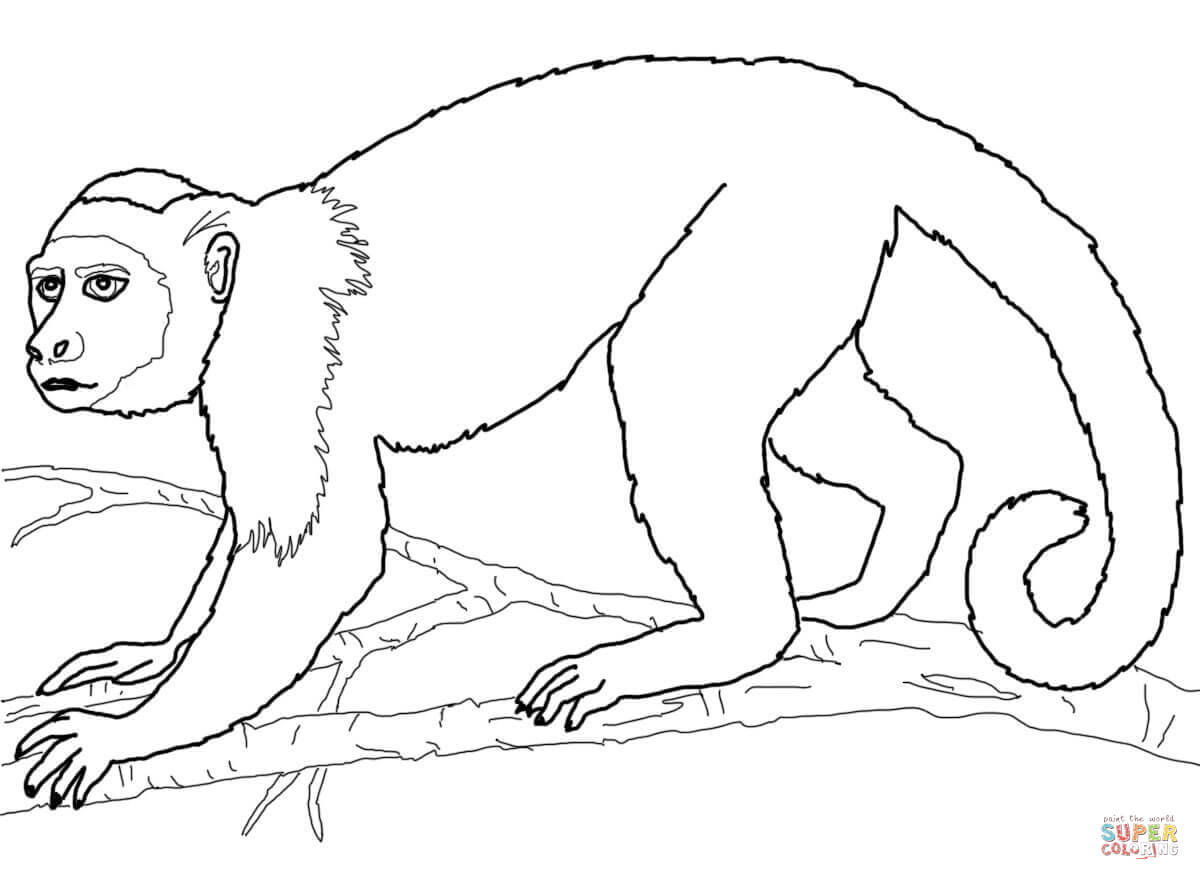 1200x880 Capuchin Monkey Coloring Page Free Printable Coloring Pages