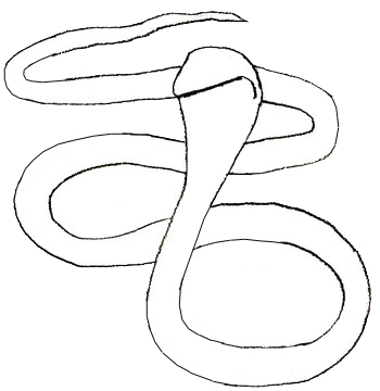350x360 How To Draw A Snake