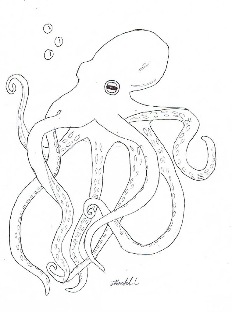 realistic octopus coloring page realistic octopus drawing at free for