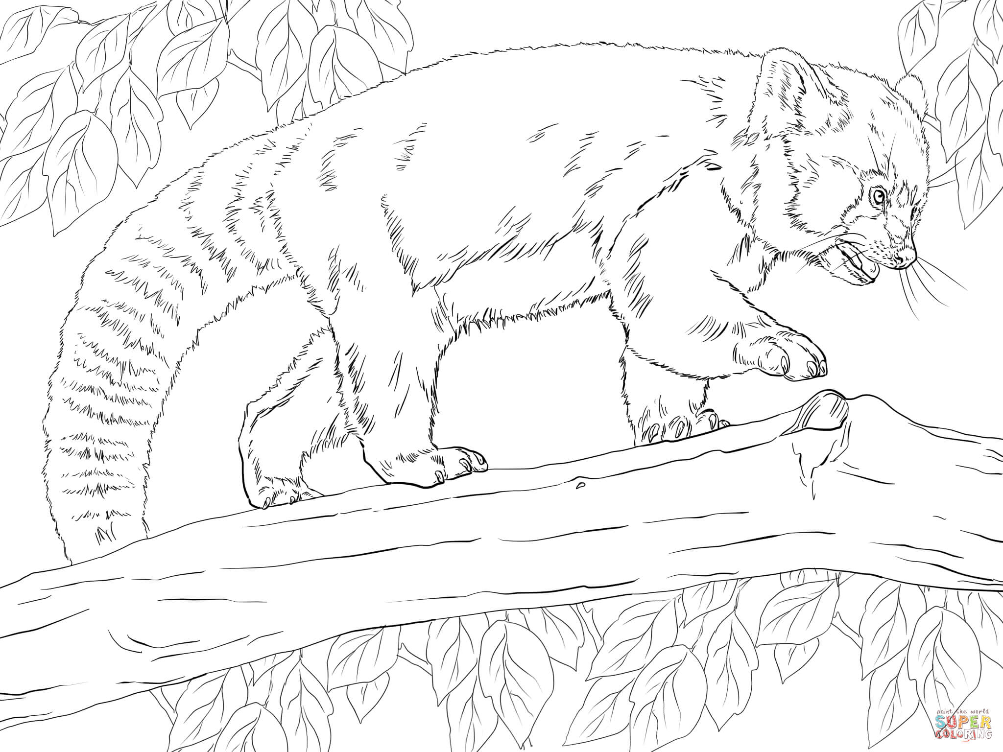 2048x1536 Realistic Red Panda Coloring Page Free Printable Pages