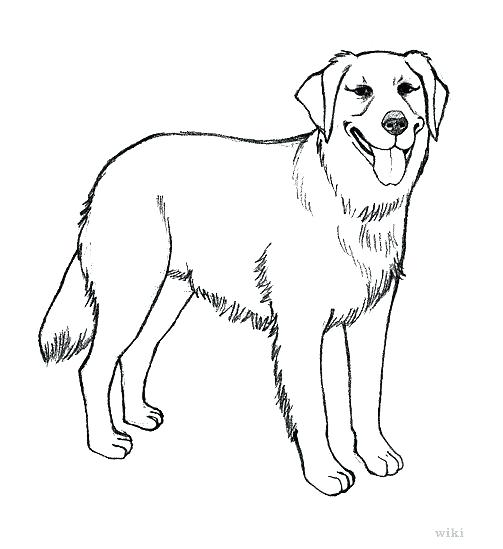 503x549 Golden Retriever Coloring Pages Pin Drawn Golden Retriever Happy