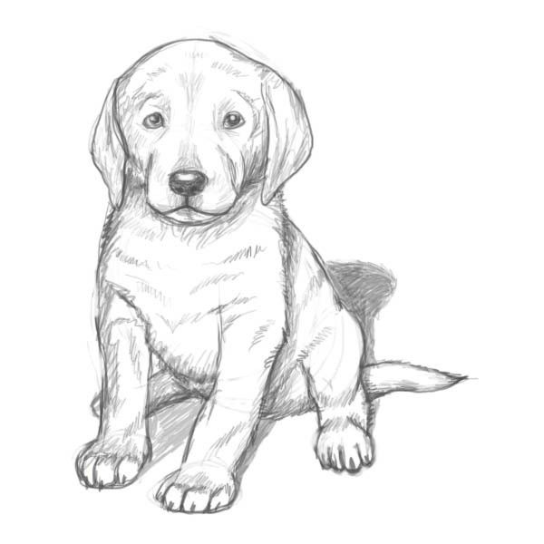 Realistic Puppy Drawing At Getdrawingscom Free For Personal Use
