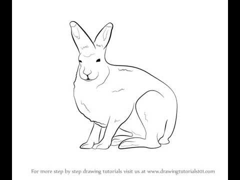 480x360 How To Draw Arctic Hare