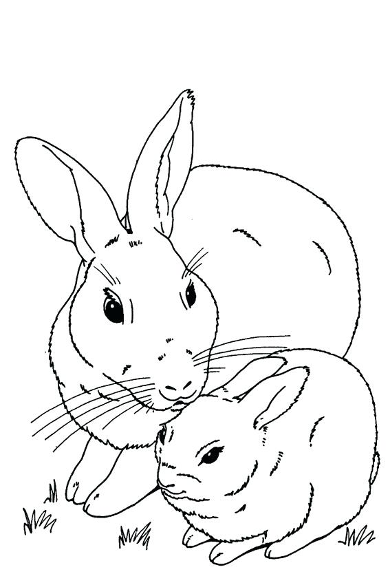 567x850 Bunnies Realistic Image Of A Sweet Little Bunny Coloring Page