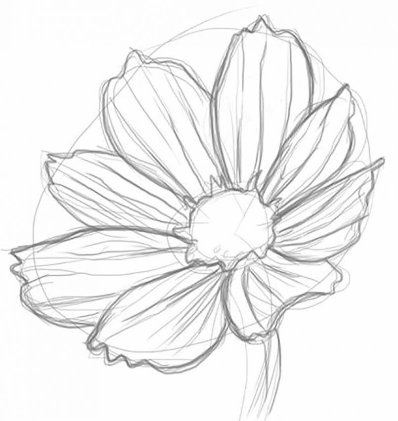 805x852 Easy Realistic Flowers To Draw Step By Step