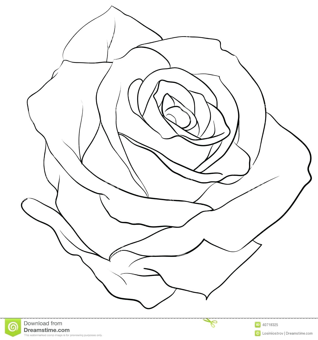 1300x1390 Gallery Rose Drawing Outline,