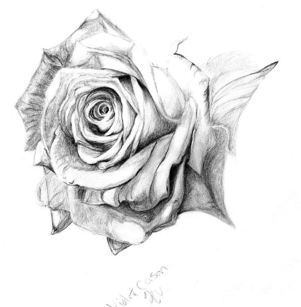 1005x1024 Pencil Drawing Of Roses How To Draw Rose In Pencil Draw