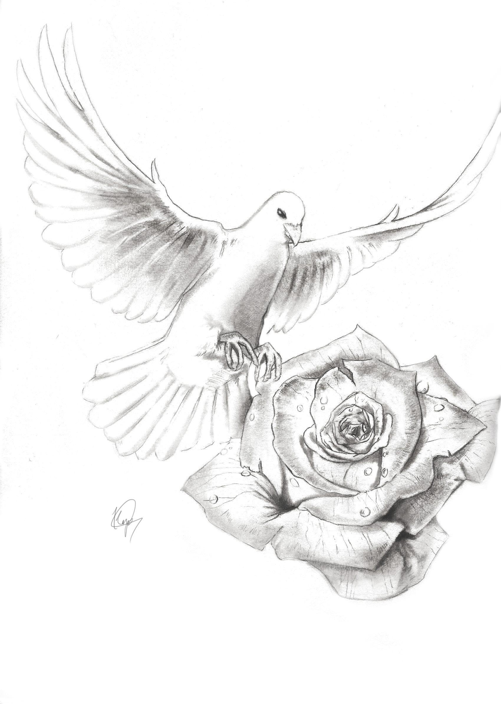 1700x2390 Realistic Dove Drawing