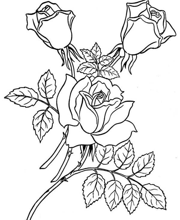 600x734 Realistic Rose Coloring Pages