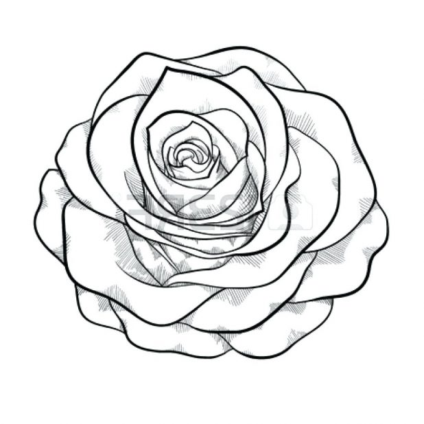 618x618 Rose Drawing Outline