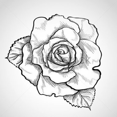 380x380 Rose Sketch Clipart