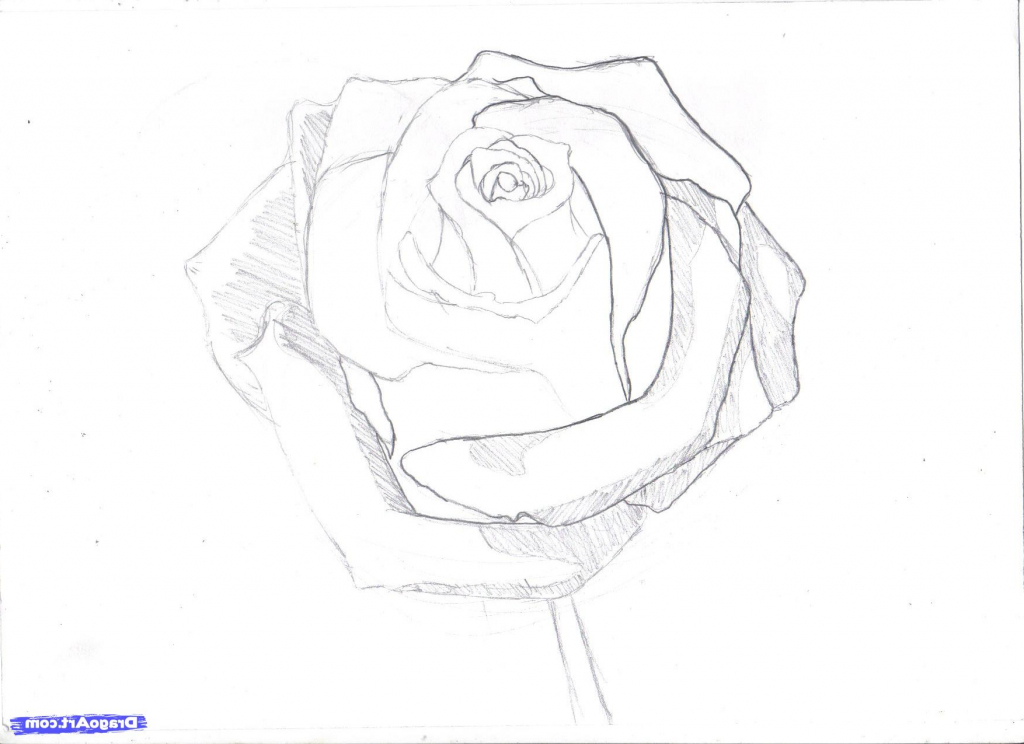 1024x744 Step By Step Pencil Drawing Tutorial How To Draw A Rose In Pencil