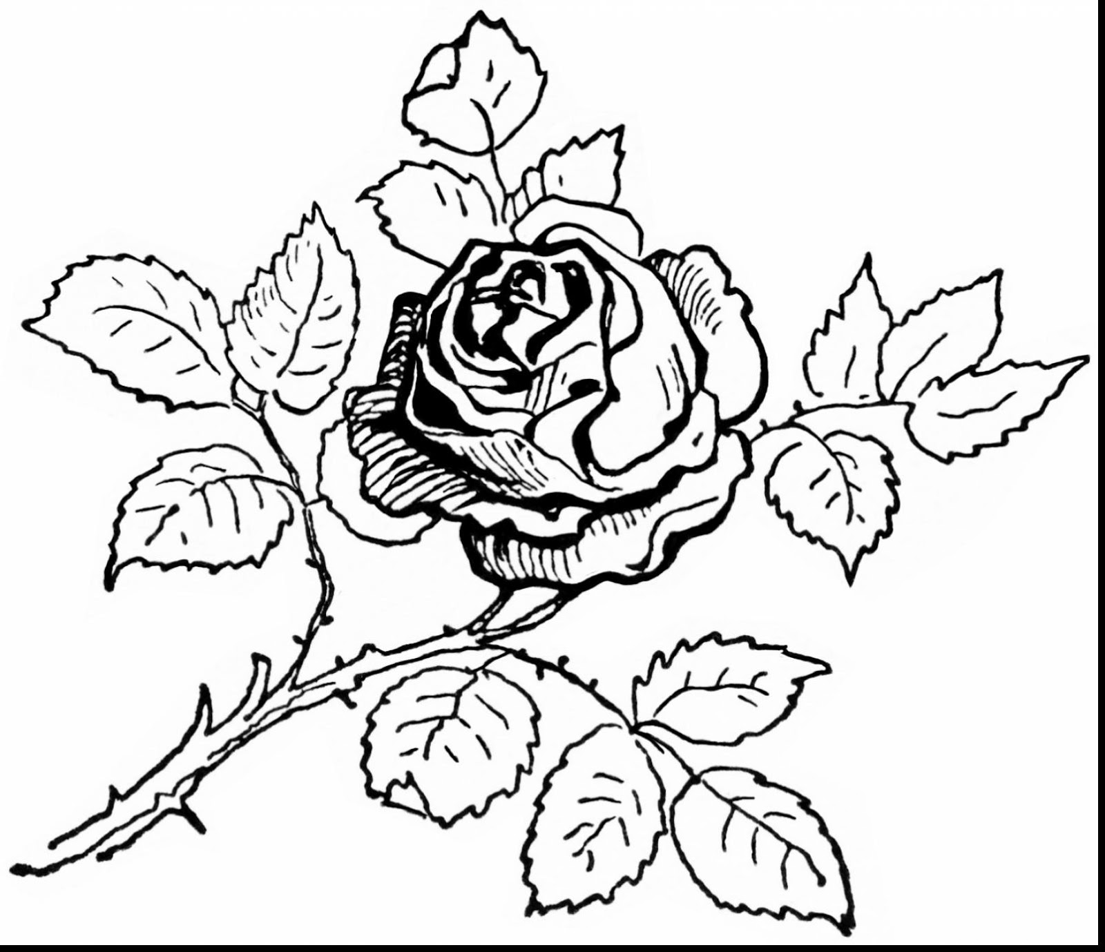 1600x1379 Top 10 Beautiful Rose Coloring Pages Drawing