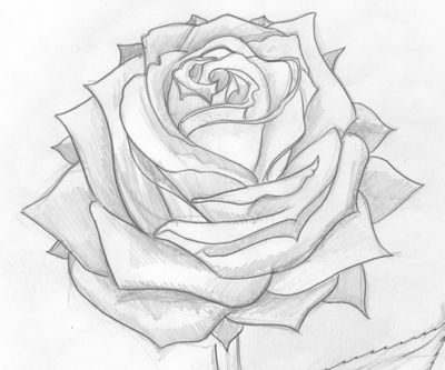 400x333 Rose Pencil Art 40 Beautiful Flower Drawings And Realistic Color
