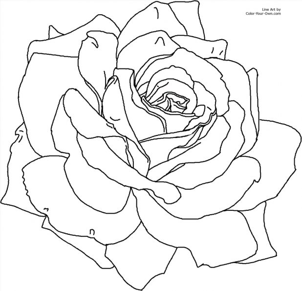 618x595 Coloring Marvellous Rose Drawing Outline. Easy Rose Drawing