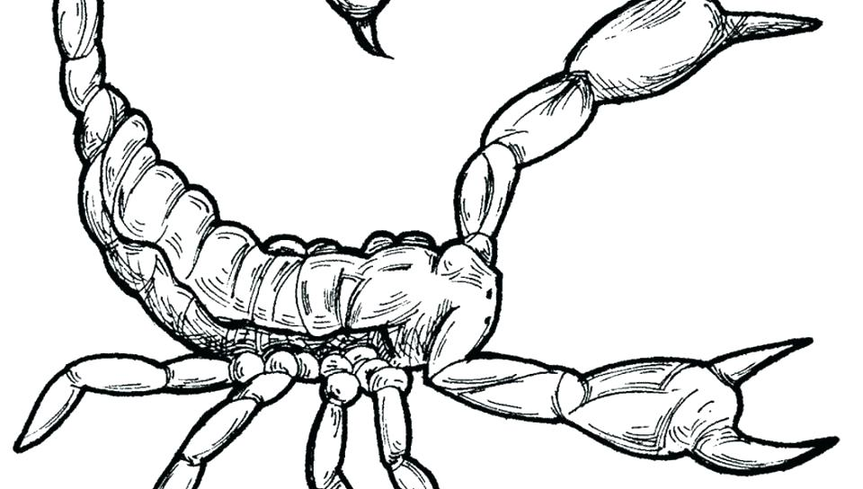 Realistic Scorpion Drawing at GetDrawings.com | Free for ...