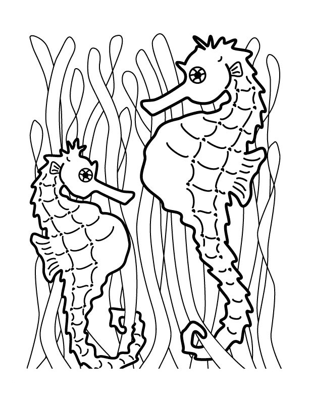 612x792 Seahorse Coloring Pages