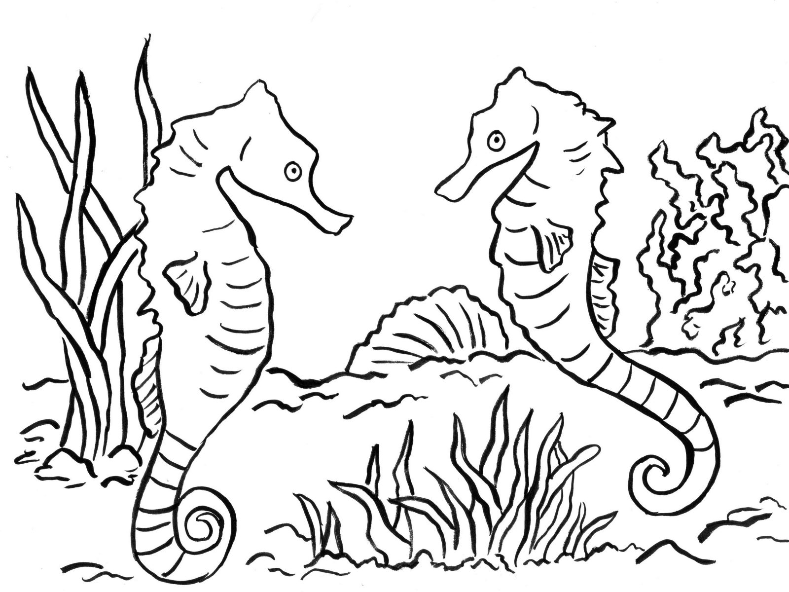 1600x1200 Coloring Pages Seahorses Exquisite Ocean For Adults Free Printable