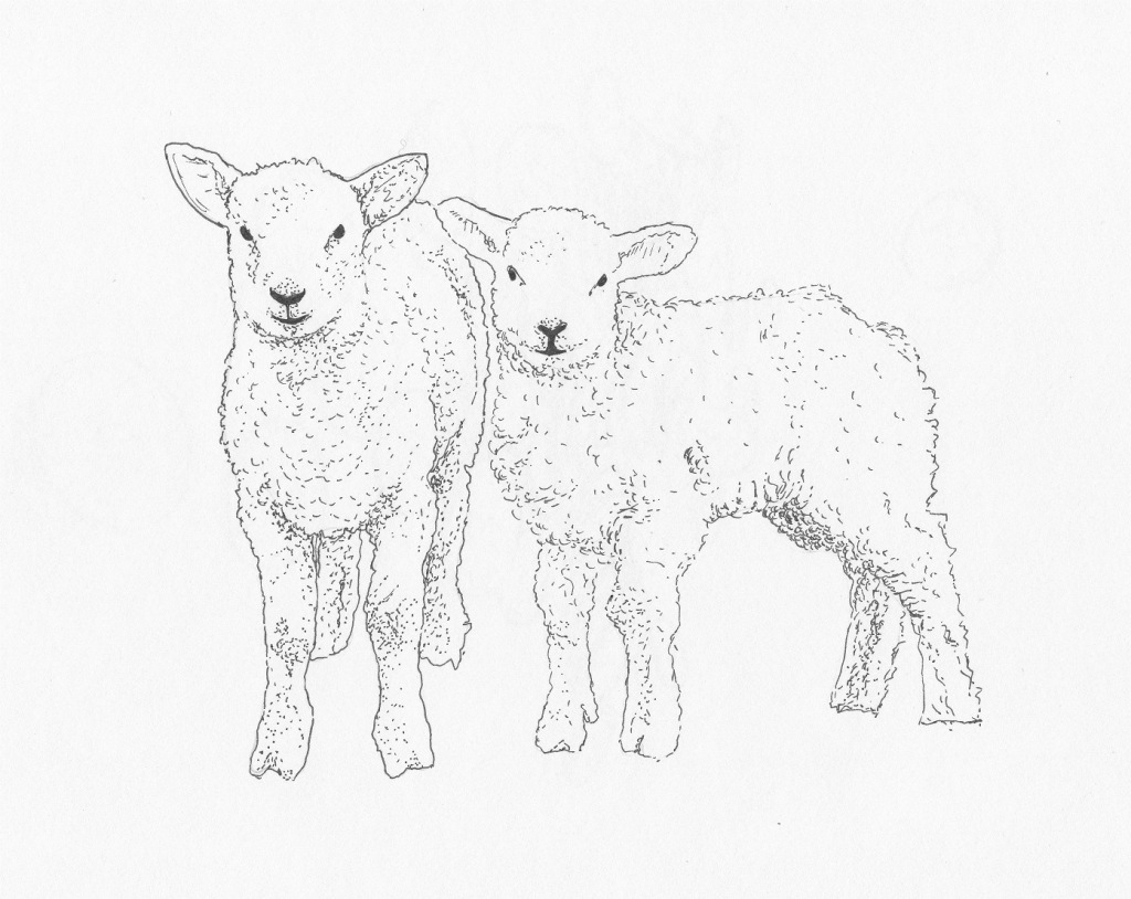 1024x814 Pin By Jackie On Drawing Pinterest Lambs Sketches And Drawings