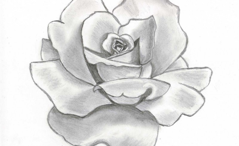 800x491 Realistic Drawing Of Flower Gardening Flower And Vegetables