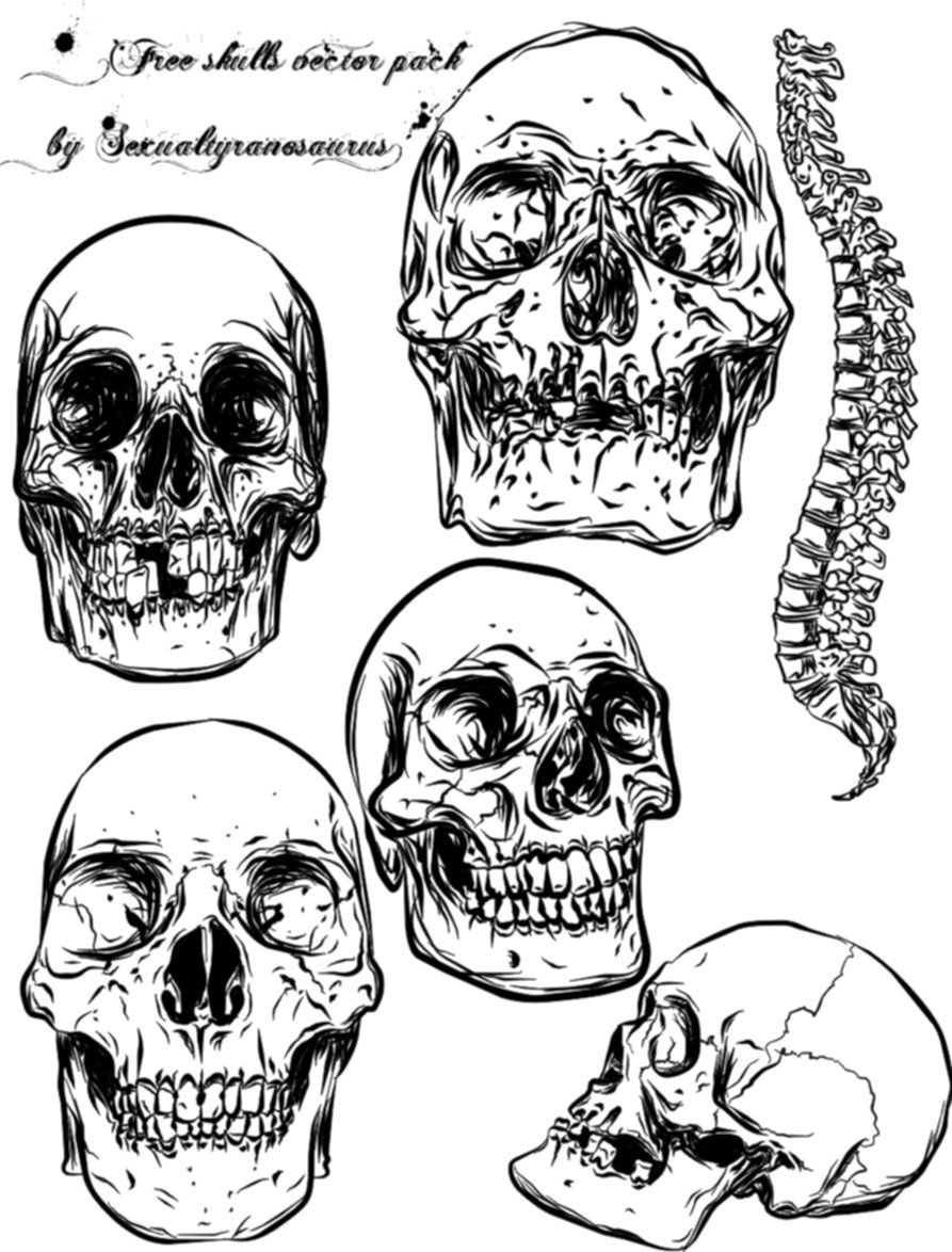 893x1174 Skull Vector Pack By Sexualtyranosaurus Skulls