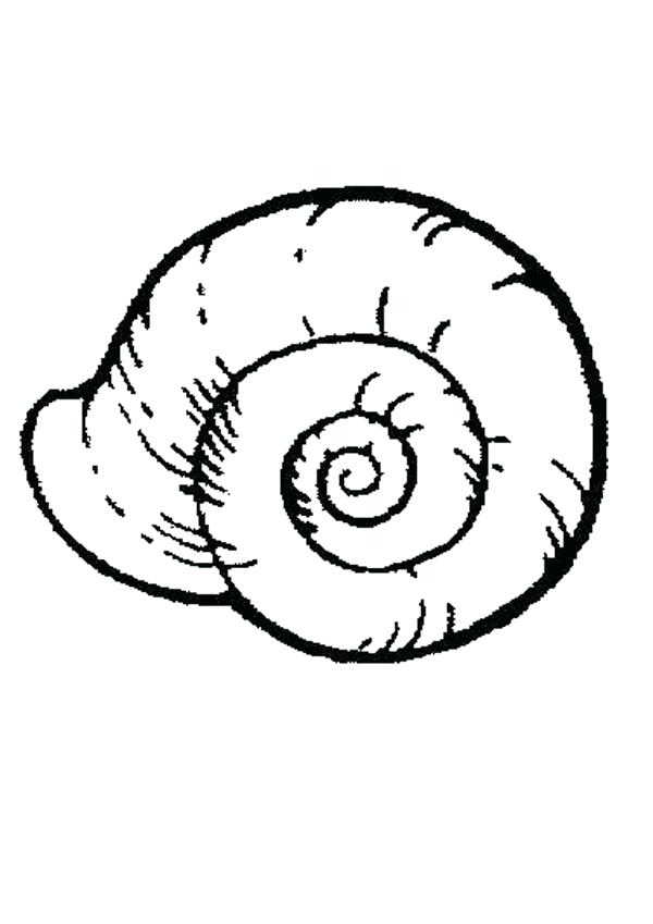 Realistic snail drawing at free for for Sea snail coloring page