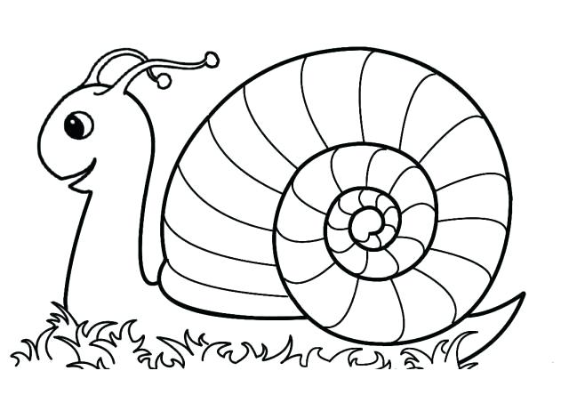 how to draw a realistic snail step by step