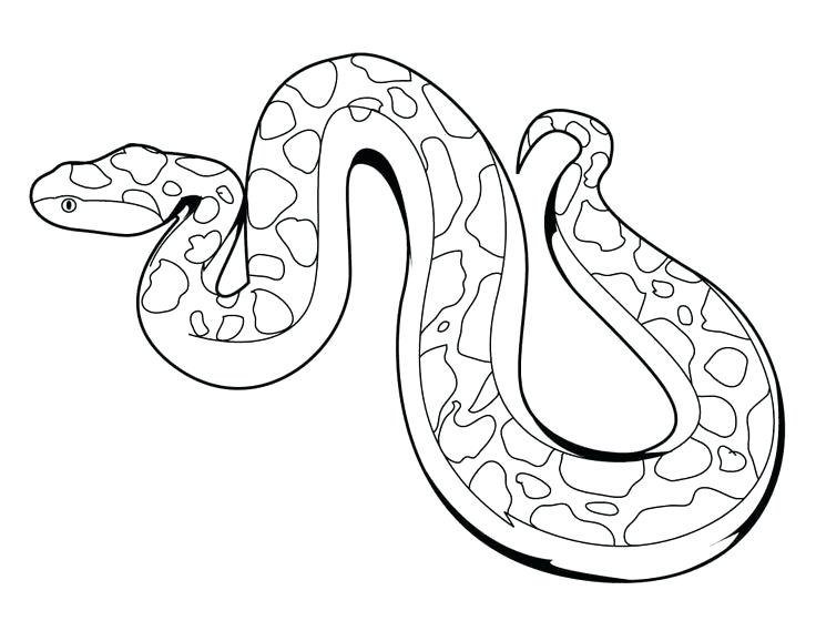 736x569 Here Are Snake Coloring Page Pictures Snake Coloring Page 9 Snake