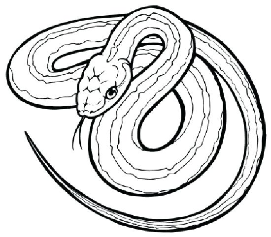 Realistic Snake Drawing at GetDrawings.com | Free for personal use ...
