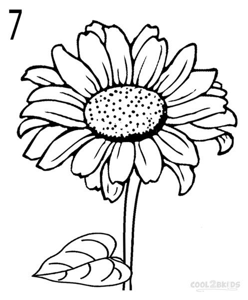 497x600 How To Draw A Sunflower Step 7 Drawings Sunflowers