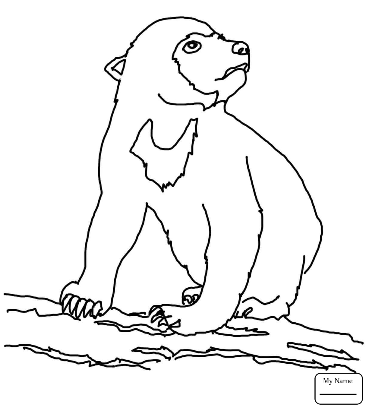 1224x1363 Sun Bears Realistic Sun Bear Mammals Coloring Pages For Kids