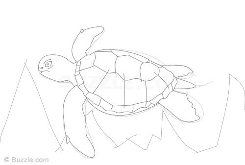 Realistic Turtle Drawing At Getdrawings Com Free For Personal Use