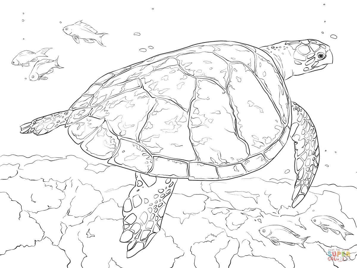 1200x900 Realistic Hawksbill Sea Turtle Coloring Page Free Printable
