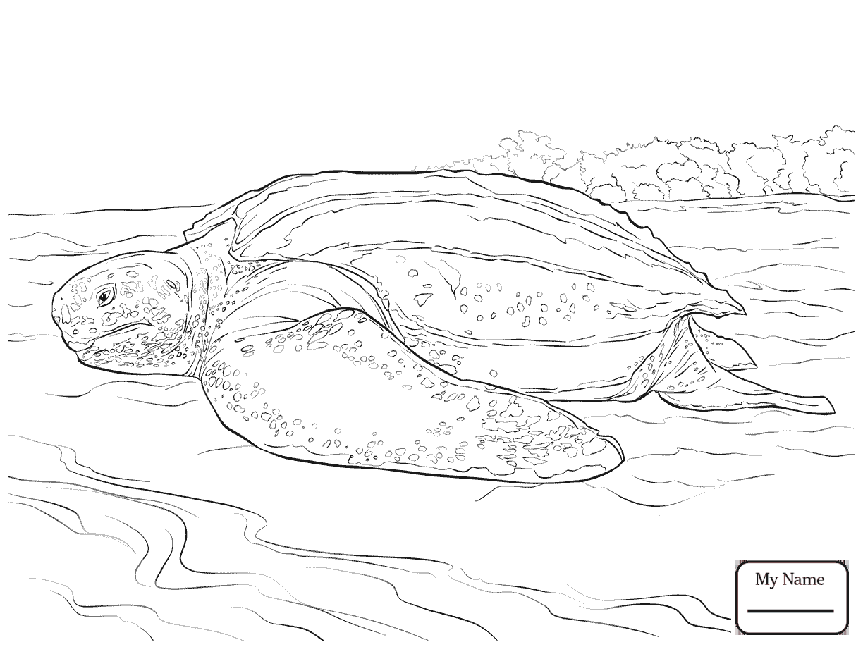 Realistic Turtle Drawing at GetDrawings.com | Free for personal use ...
