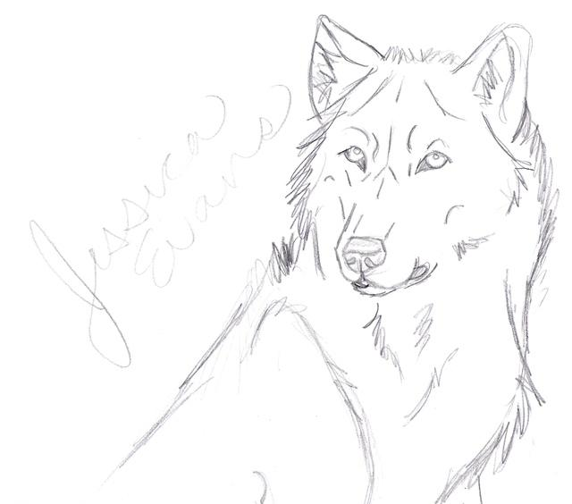 640x564 Realistic Wolf Sketch Headshot By Whenitallxfalls