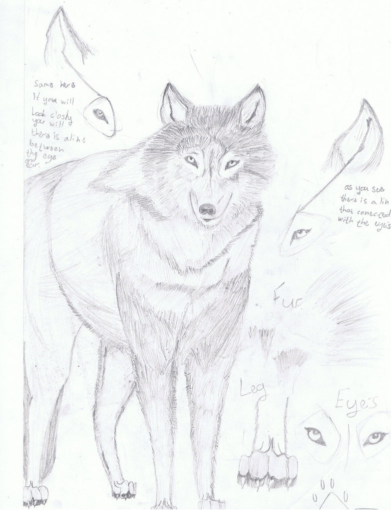 783x1020 Another Realistic Wolf Draw By Wolfsoulkeeper