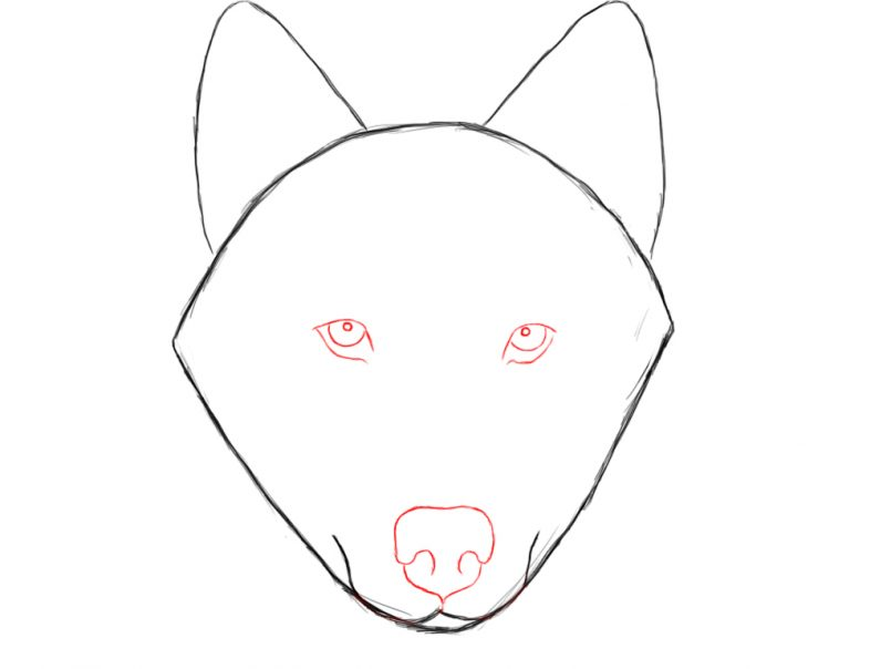 805x604 Drawing Easy Wolf Head Drawings Together With Easy Realistic