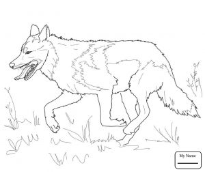 300x252 Free Printable Red Wolf Coloring Page Animals Sheets Pages Stock