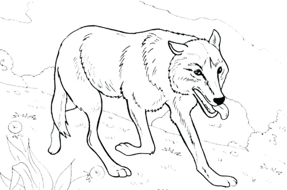 1000x662 Here Are Wolf Coloring Pages Images Realistic Wolf Coloring Pages