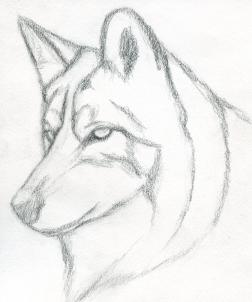 252x302 How To Draw A Wolf Head, Mexican Wolf, Step By Step, Forest