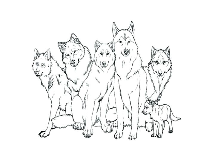700x525 Coloring Pages Of Realistic Wolves