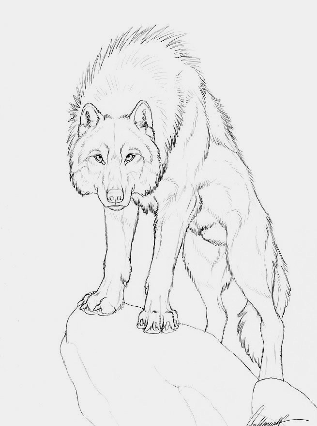 655x879 Pin By Amanda Schmidtke On Wolves Wolf, Drawings